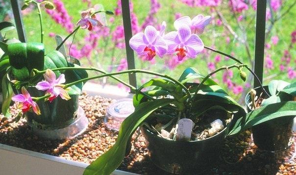 Комнатные растения — ваша судьба на подоконнике