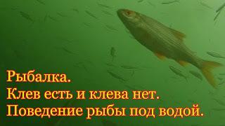 Рыбалка. Клев есть и нет. Поведение рыбы под водой