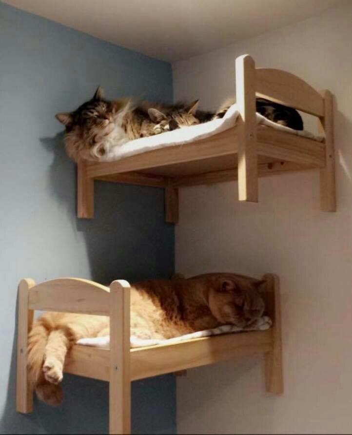 Кошачьи полати