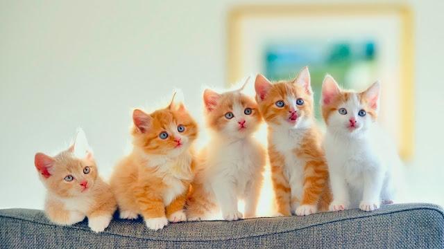 Кошки. Приметы и суеверия