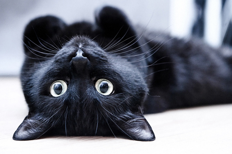 Черный кот. А, может быть, кошка