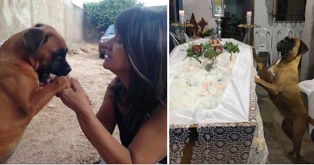 Женщина умирает от рака — тогда ее собака приходит на похороны и делает нечто душераздирающее