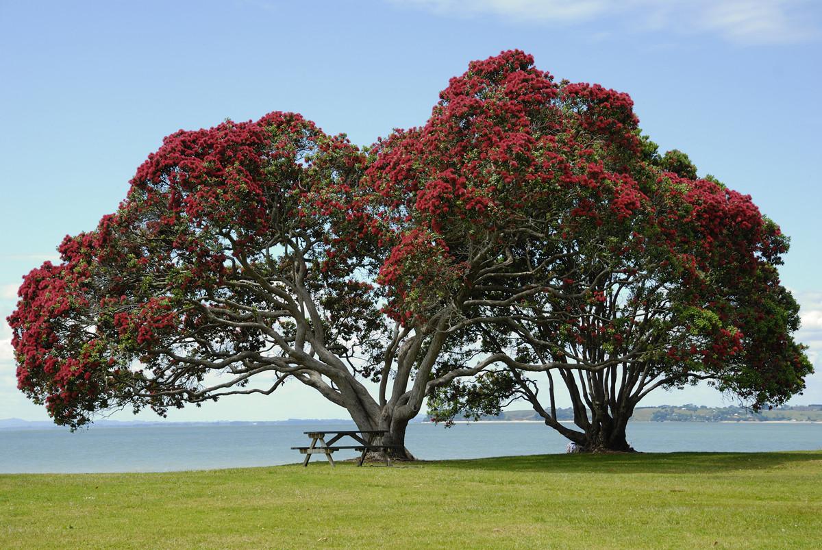 Криволесье и мегатравы: слышали что-нибудь об этом? Удивительная красота, австралия, новая зеландия, природа