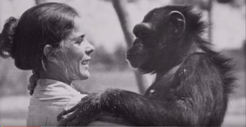 Шимпанзе не забыла, что сделала эта женщина