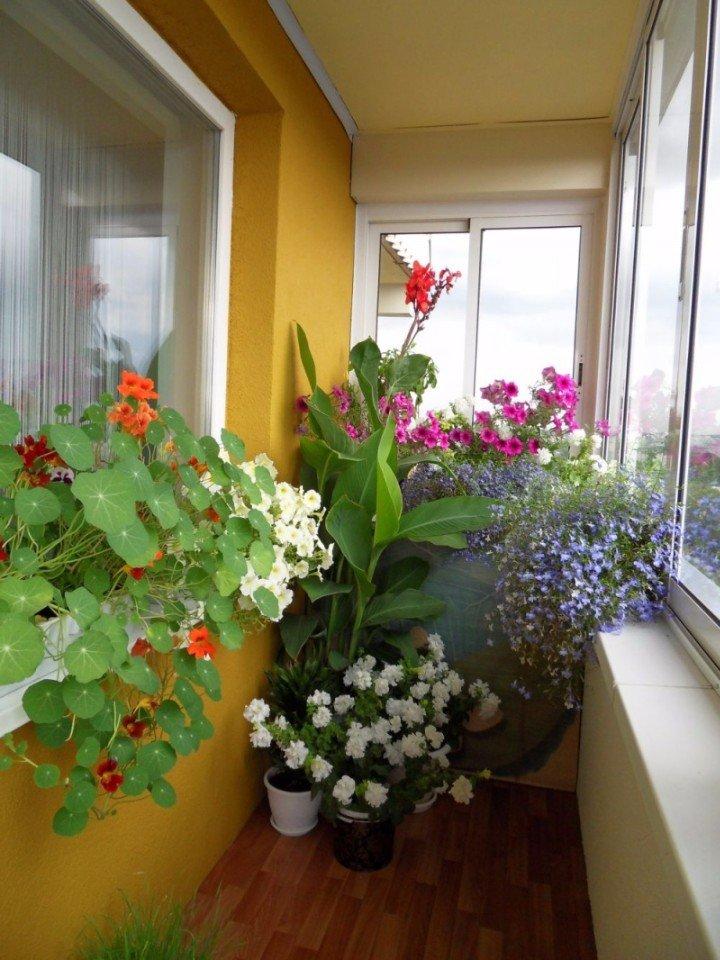 """Цветы на балконе: яркие акценты"""" - карточка пользователя kot."""
