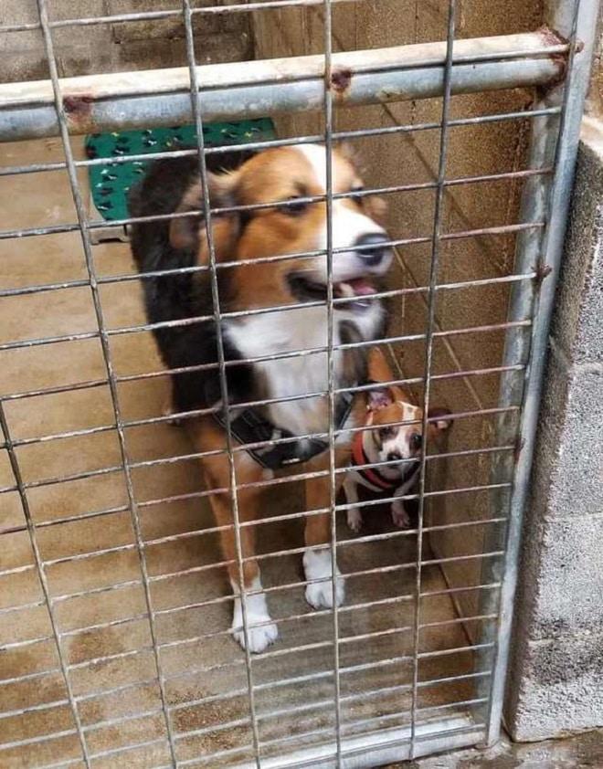 Улыбчивый пес загрустил, когда его бросили, но люди нашли способ вернуть ему лучик счастья
