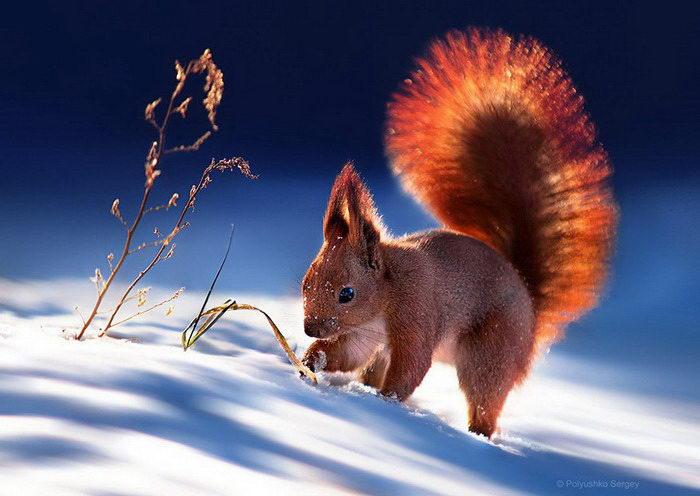 Животные в фотографиях Сергея Полюшко