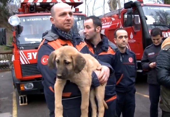 В Турции вытащили щенка из глубокого колодца с помощью роботизированной руки