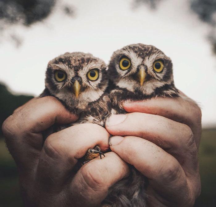 Удивительные птенцы с крупными глазами.