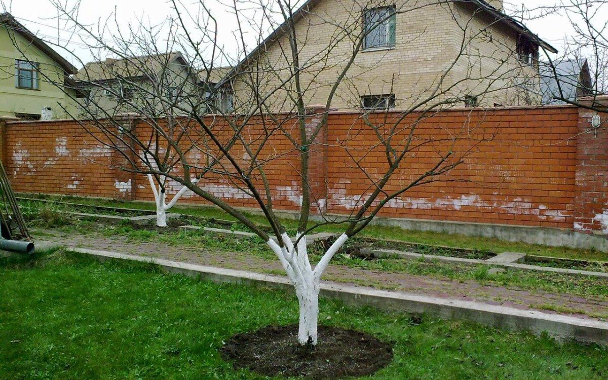 Когда нужно поливать плодовые деревья