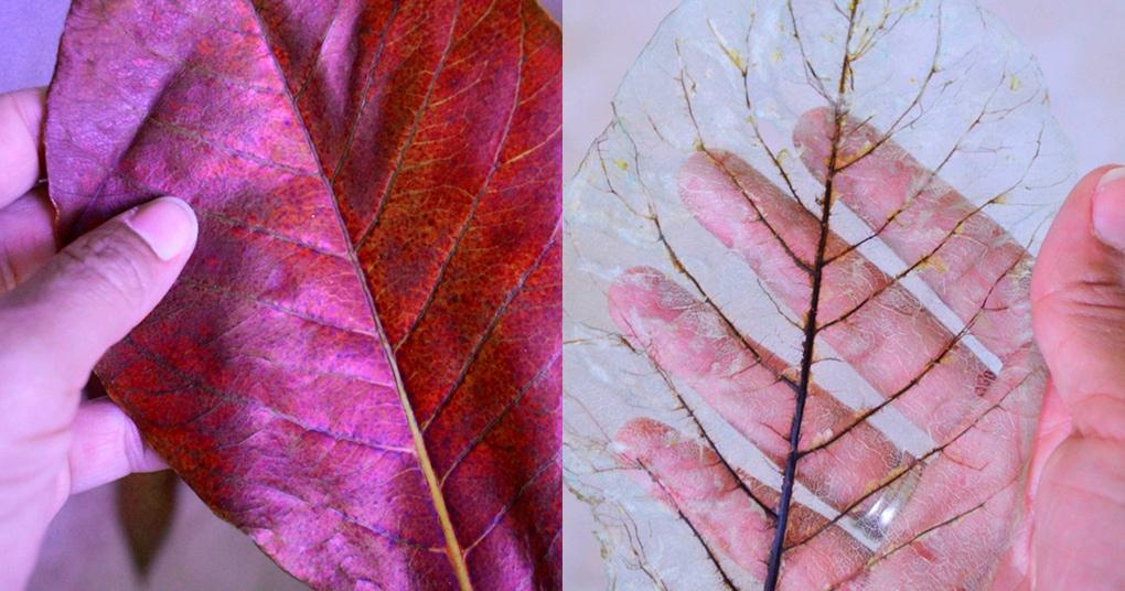 Сварите обычный лист с содой: необычный элемент для украшения интерьера