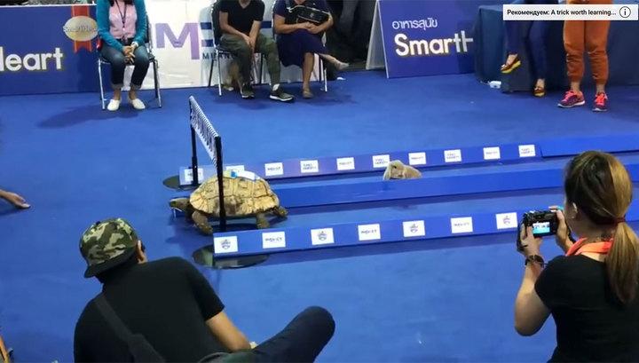 Черепаха победила кролика в гонке