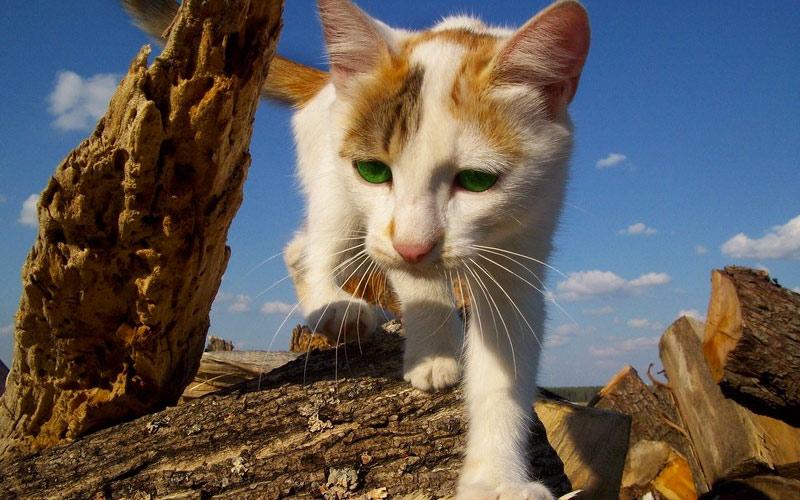 kitties19 30 способов использования котов в хозяйстве