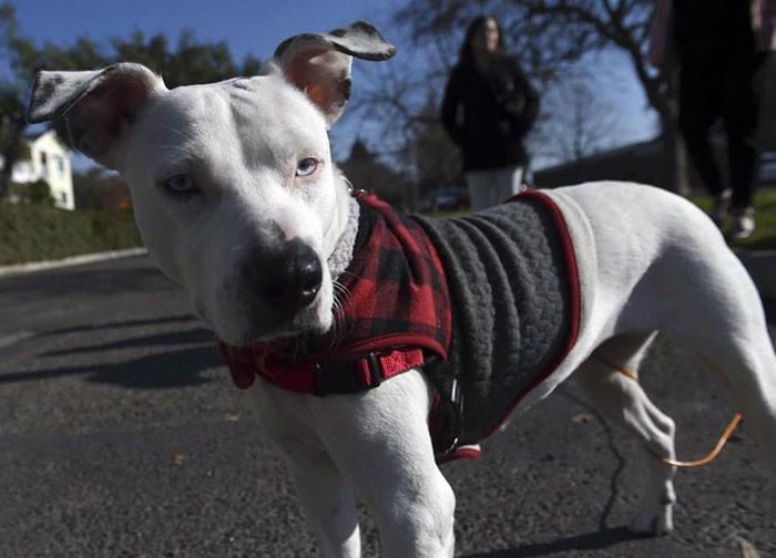 Последним желанием бездомного было позаботиться о собаке... и это желание исполнилось! люди и звери, последнее желание, собаки, трогательно
