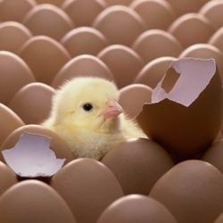 Великолепные идеи использования яичной скорлупы