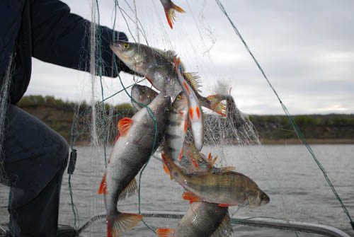 можно ли ловить рыбу до 10 июня