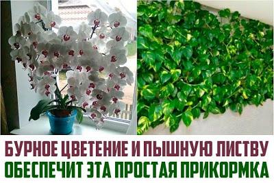 Бурное цветение и пышная листва обеспечены