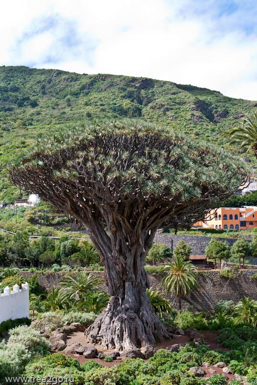 tenerife 53 Старинные города   Тенерифе, Канарские острова, Испания.