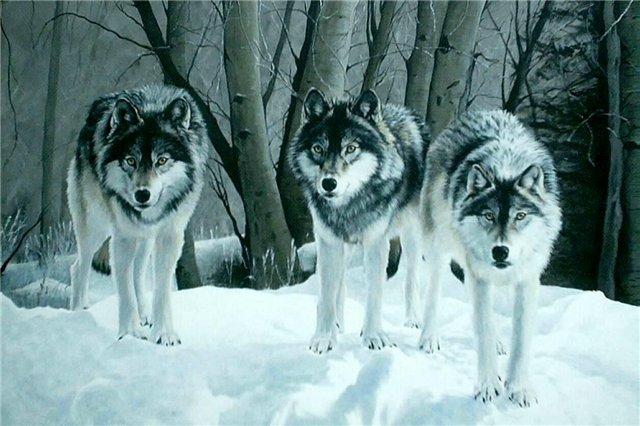 Волки: охота с чердака