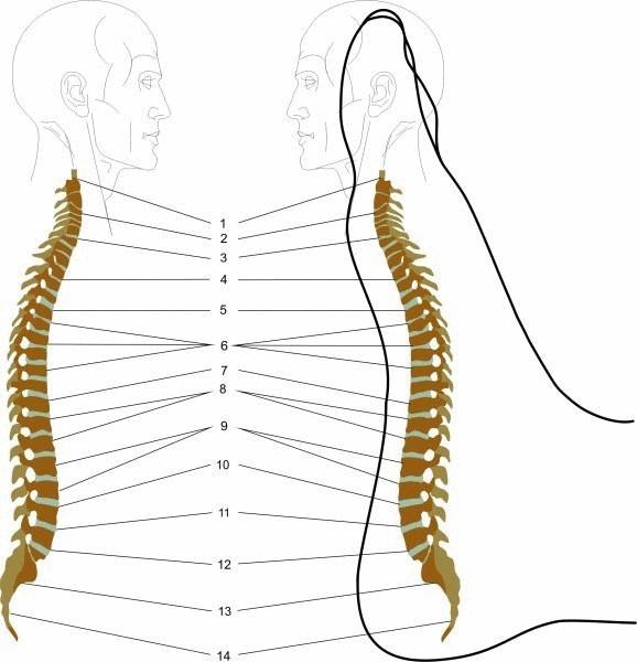 Как массажем стопы снять напряжение в спине