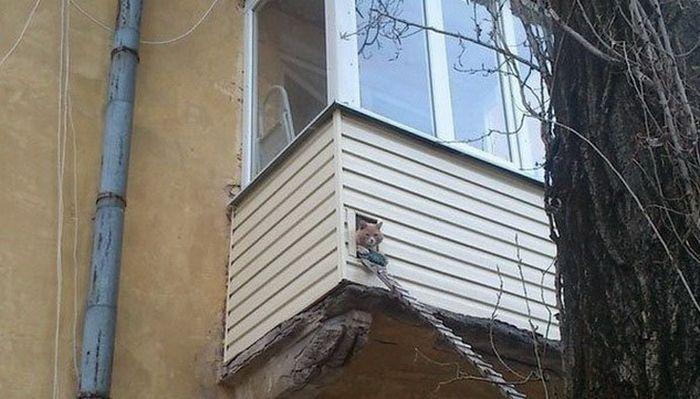 Балкон для котэ