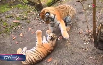 Как жители подмосковной деревни соседствуют с частным зоопарком