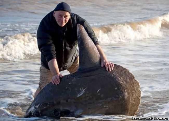 На побережье Северного моря выносит трупы гигантских рыб