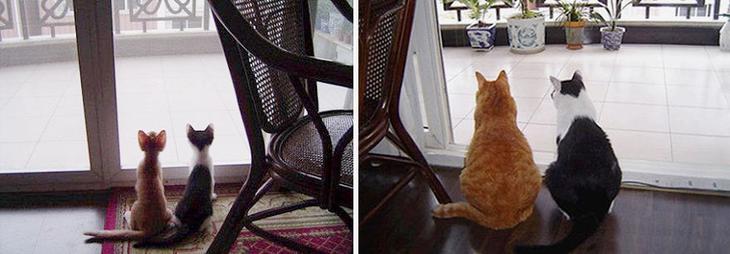 Как же быстро растут кошки – 30 милых фотографий До и После