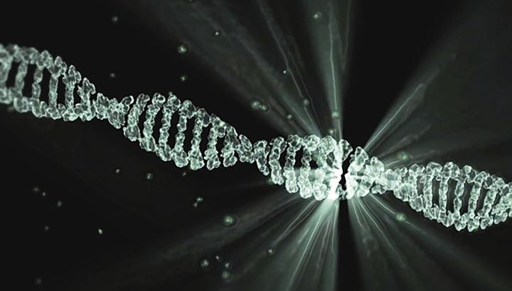 Российские учёные создали микрокапсулы для доставки генетического материала в редактируемую клетку