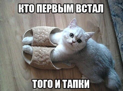 Порция Котопозитива :)