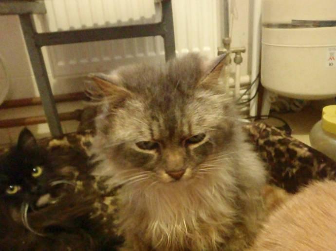 Под Петербургом спасли несколько кошек из мешков