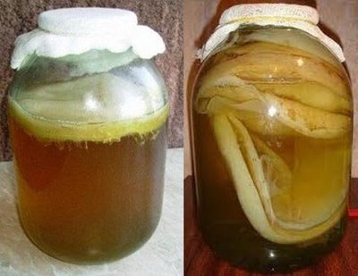 Полезные свойства чайного гриба