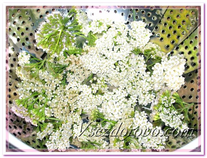 Выкладываем на решетку промытые соцветия тысячелистника