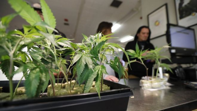 Пункт продажи марихуаны. Калифорния