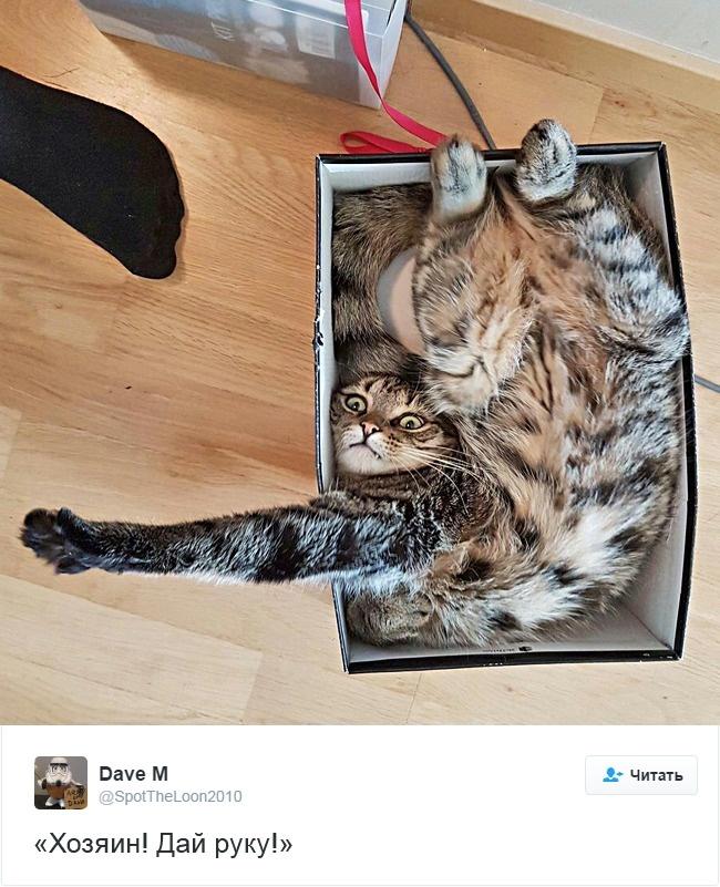 15 кошек, которые взорвали интернет в этом году!