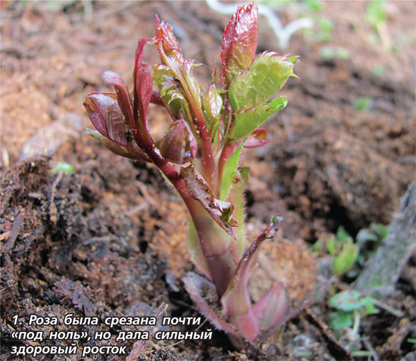 Помощь растениям после зимы