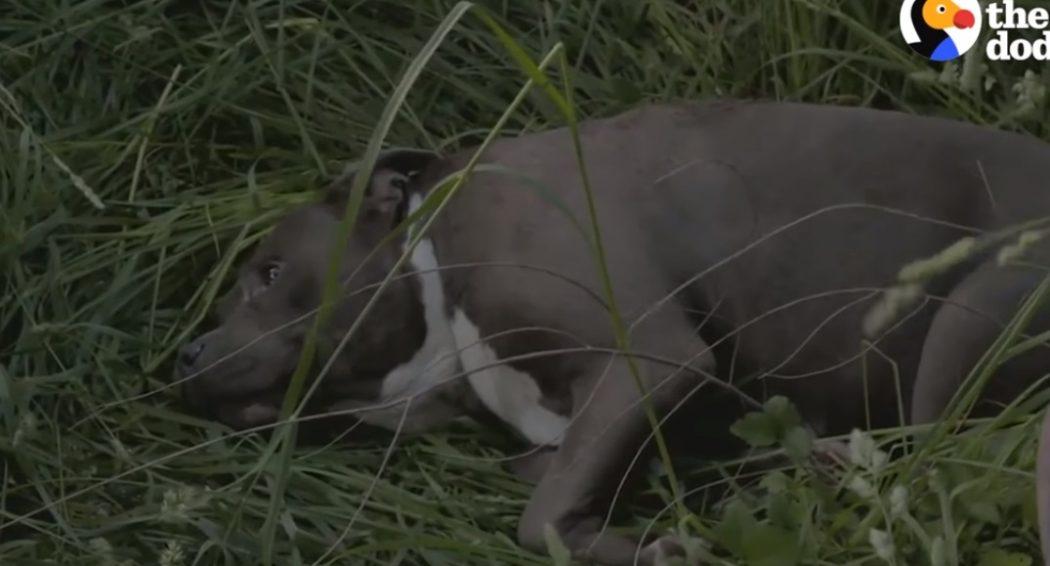 Собака, которой выстрелили в морду, снова счастлива!