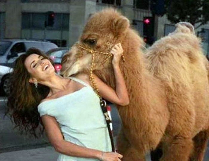 Любвеобильный жираф.