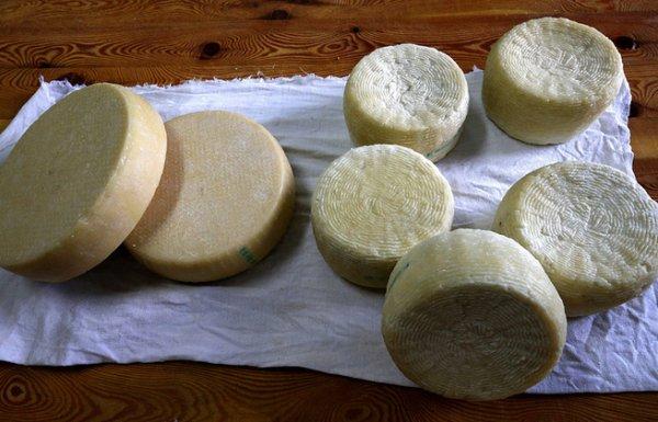 Спасибо санкциям: российские сыровары открывают новые производства и увеличивают выручку