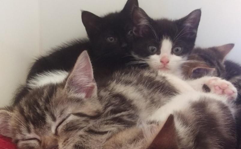 История спасения кошки и котят, которых нашли в чемодане.