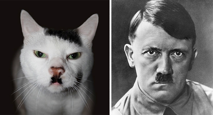 56 примеров забавного и неожиданного сходства вещи, животные, люди, сходство