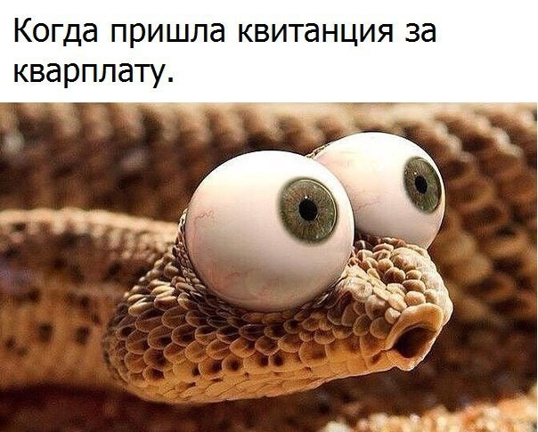 http://mtdata.ru/u3/photo1DEE/20067976968-0/original.jpg
