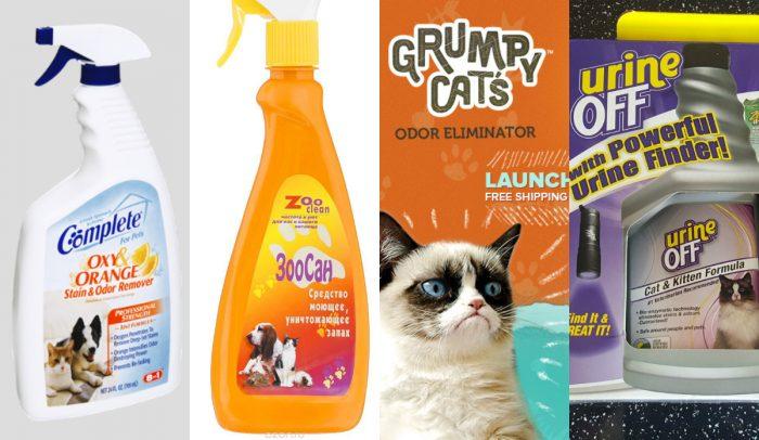 Чем вывести запах от кошачьей мочи с ковра в домашних условиях