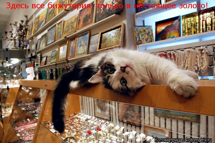 Котоматрица: Здесь все бижутерия, только я настоящее золото!