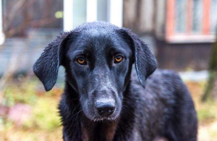 Однажды, владелец небольшого магазинчика увидел отощавшего бездомного пса...
