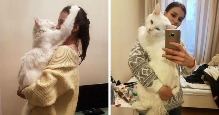 Огромный кот Тихон, который очень любит обниматься