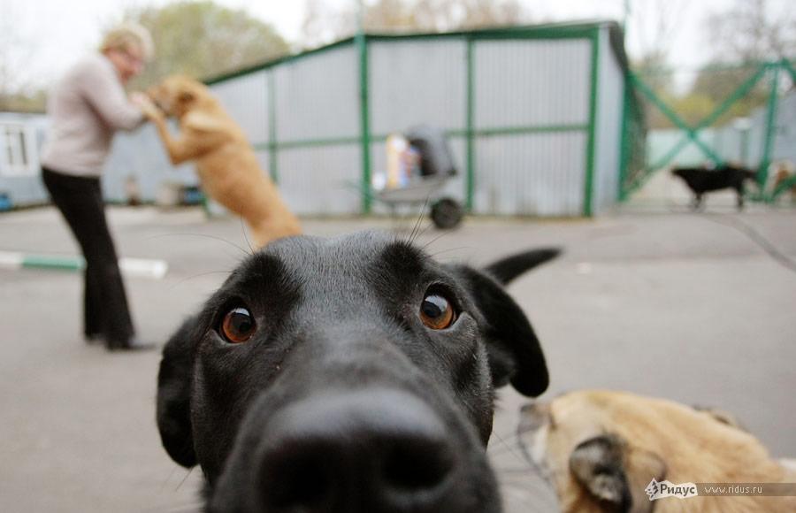 """""""Собака — это хищное животное, что у нее на уме, мы не знаем"""": Онищенко предложил усыплять собак, которых не забирают из приютов"""
