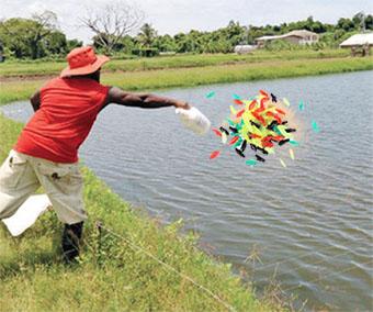 Прикормка на хищную рыбу, демисезонная обувь, daiwa silver creek