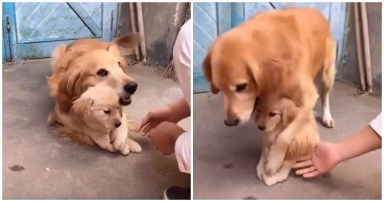 Эта собака не разрешает прик…