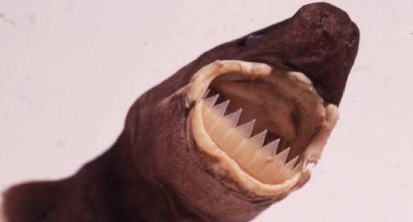 9 жутких существ, доказывающих, что природа не особо дружелюбно к нам настроена